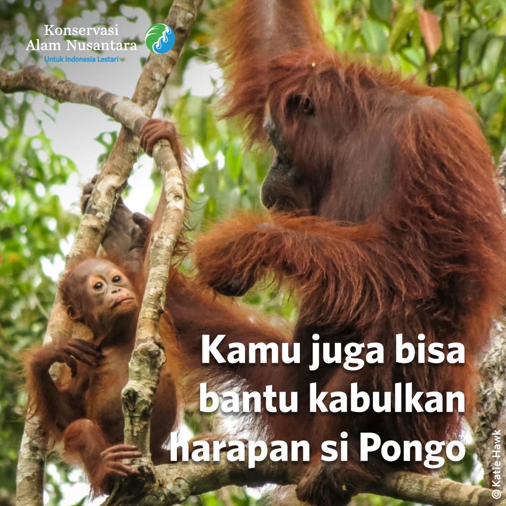 Ayo Bantu Beri Harapan Baru untuk Pongo, Si Orang Utan 1